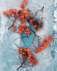 Winter Garden - Berries 4