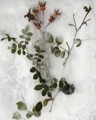 Winter Garden - Roses 1