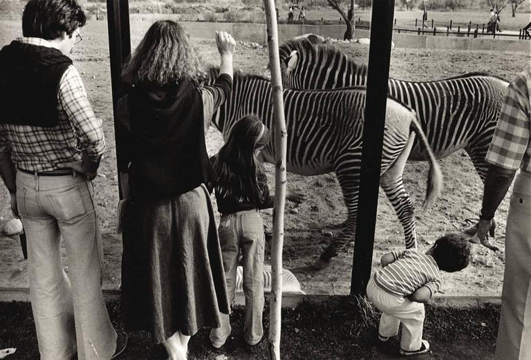 Stripes - Toronto Zoo