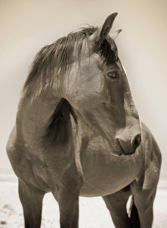Namibian Horse No.3