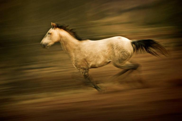 Namibian Horse No.1