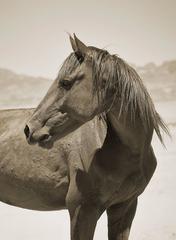Namibian Horse No. 2