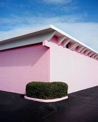 Pink Corner Hedge, Daytona Beach