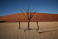 Dead Vlei 2, Namibia