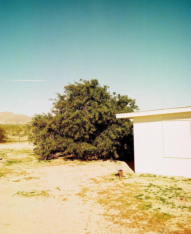 Tree, Joshua Tree