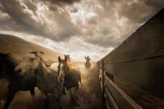 Cowboys No. 2