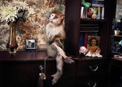 Monkey on the Ledge