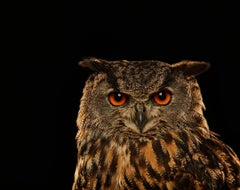 Birds of Prey - Eurasian Eagle Owl No. 13