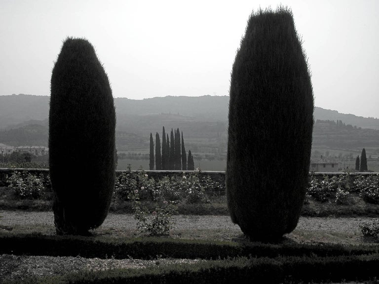 Douglas Busch Black and White Photograph - Hedges at Dusk, Italy