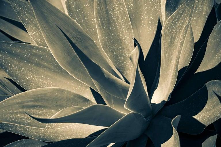 Yucca, Agrigento, Sicily