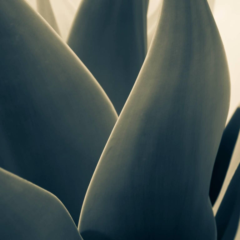 Yucca Leaves, Taormina. Sicily - Photograph by Massimo Di Lorenzo