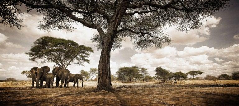 Elephants, Africa No. 1