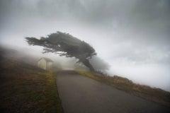California Fog