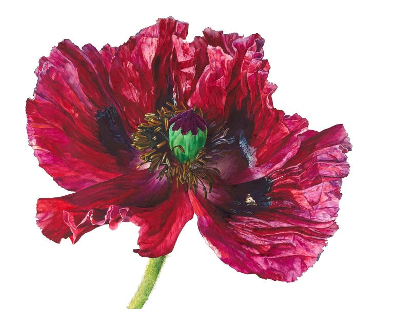 Rosie Sanders Red Poppy Painting For Sale At 1stdibs