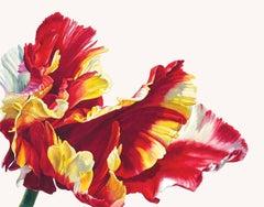 Tulipa 'Flamin Parrot'