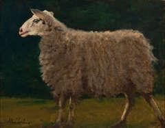 Sheep Study