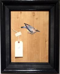 Cedar Waxwing Bombycilla cedrorum