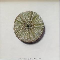 Sea Urchin / acrylic and ink framed in walnut
