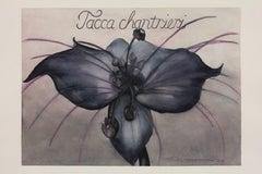 Bat Flower / botanical watercolor