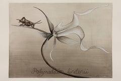Ghost Orchid / botanical watercolor