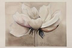 Peony / botanical watercolor