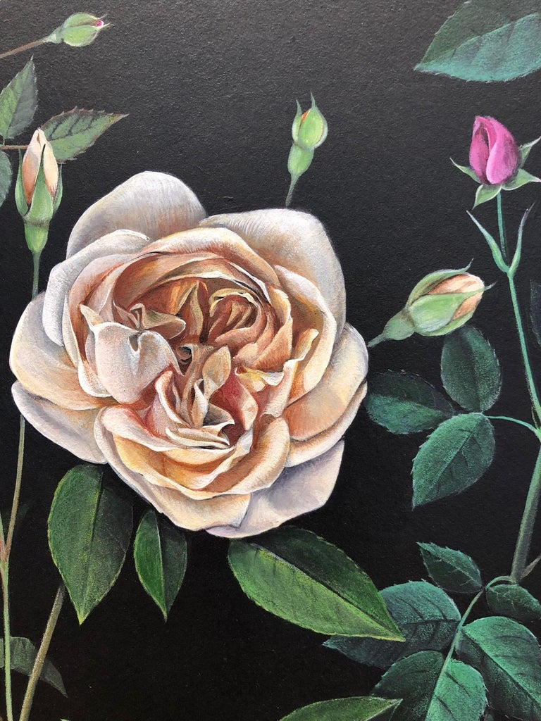 Man Made: Evolution of Roses For Sale 8
