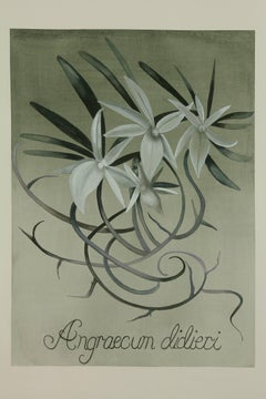 White Emblem Orchid / botanical watercolor