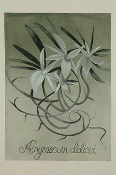 White Emblem Orchid / botanical watercolor