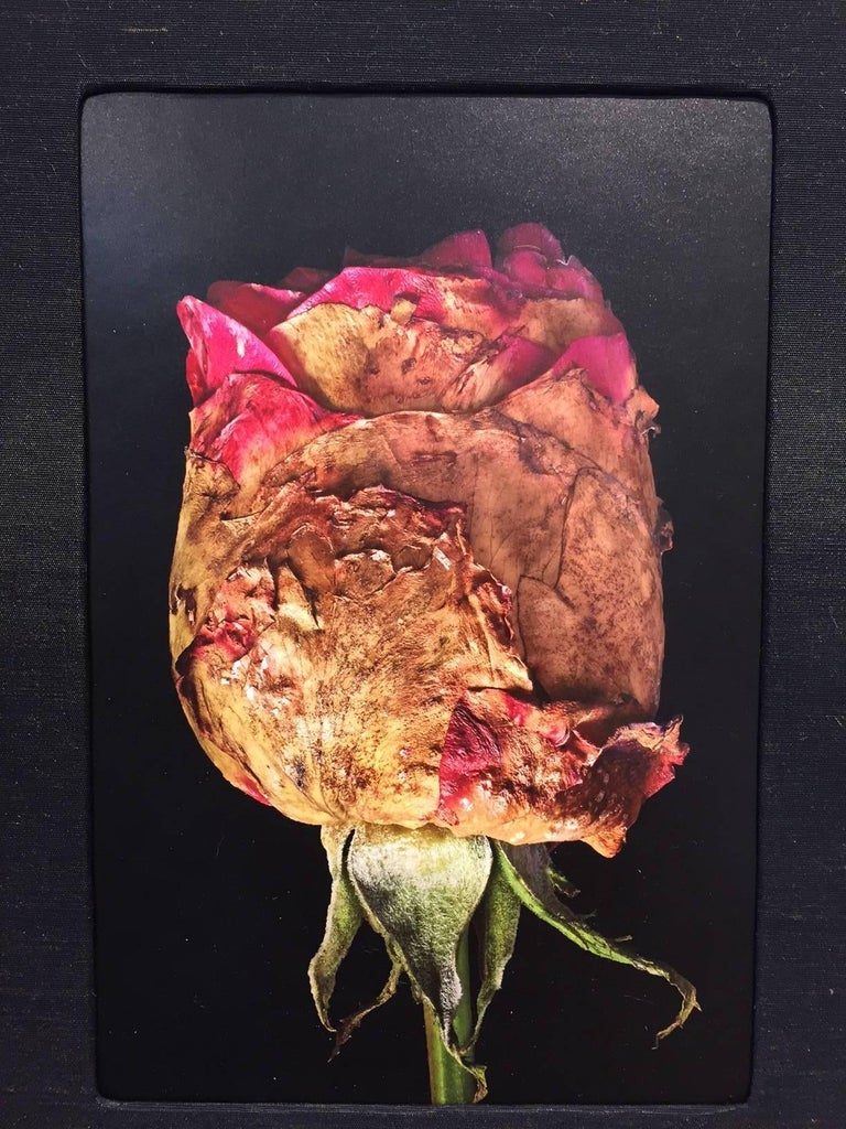 Budding / Rose photographic wall sculpture book - Contemporary Photograph by Roger Jordan