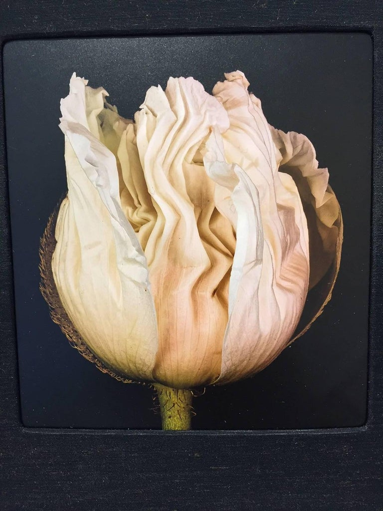 Budding / Rose photographic wall sculpture book - Brown Still-Life Photograph by Roger Jordan
