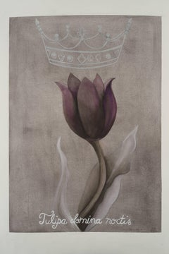 Queen of the night - tulip / botanical watercolor