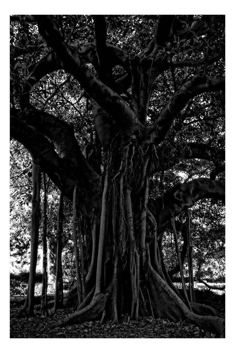 Stuart Möller Landscape Photograph - 'Black Tree' Limited Edition Oversize print