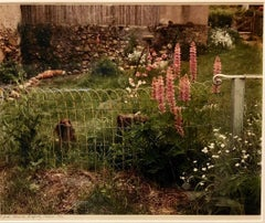 A Yard, Mezilles Burgundy France. Field Of Flowers 1986 Vintage Color Photograph