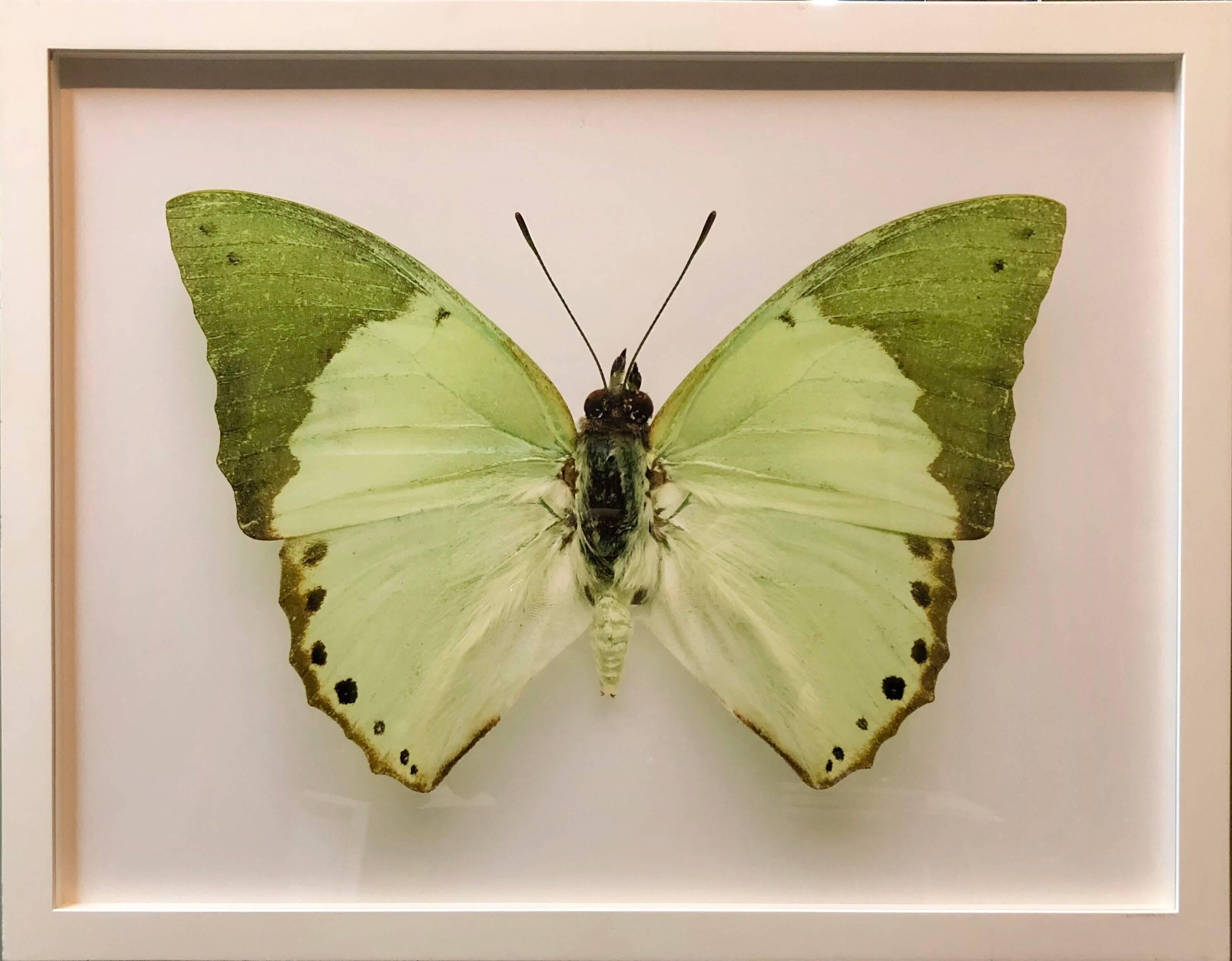 Butterfly, Modern French Framed Photograph
