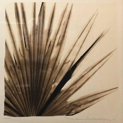 Botanical Saw Palmetto Photograph Print Hand Signed and Numbered