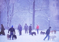 Dogs in Snow Storm, Madison Square, New York City