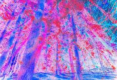 Psychedelic Forrest