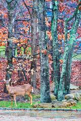Deer, East Hampton