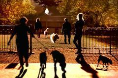 Central Park Dog Walkers