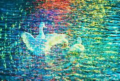 White Ducks in Prism of  Color