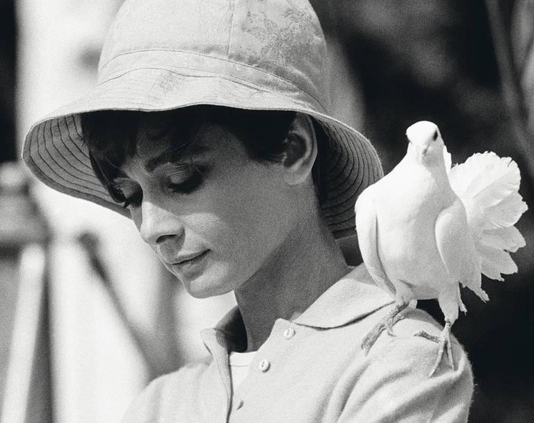 Audrey Hepburn with Dove - Photograph by Terry O'Neill