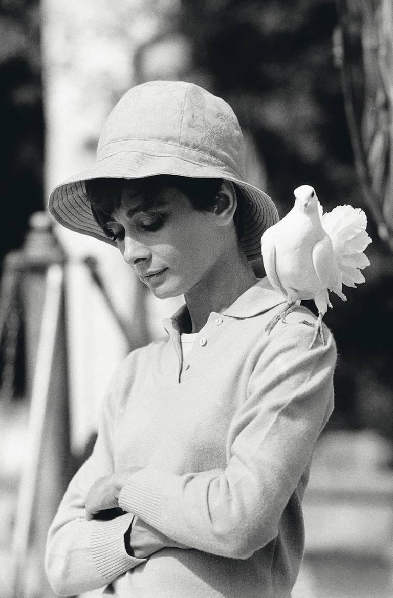 Terry O'Neill Black and White Photograph - Audrey Hepburn with Dove