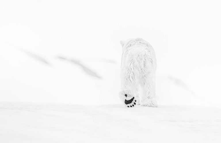 David Yarrow Black and White Photograph - 78 Degrees North