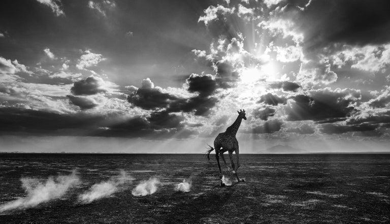 David Yarrow Black and White Photograph - Heaven Can Wait II