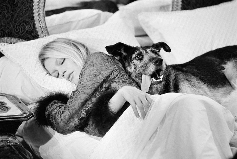 Terry O'Neill Black and White Photograph - Brigitte Bardot with dog on set of 'Les Novices', 1970