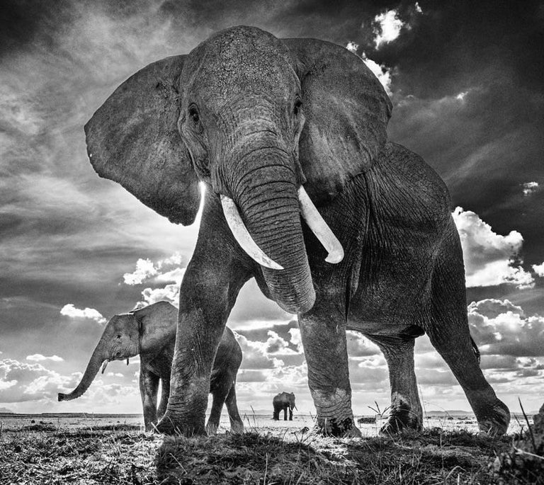 David Yarrow Black and White Photograph - The Untouchables II