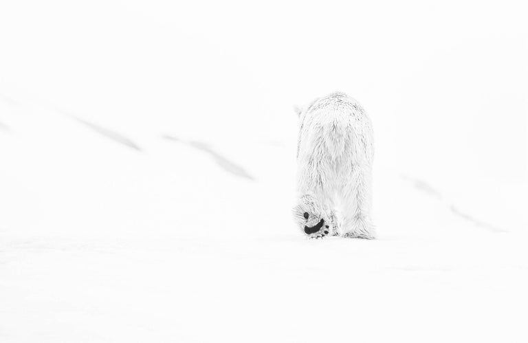 David Yarrow Black and White Photograph - 78 Degrees North II