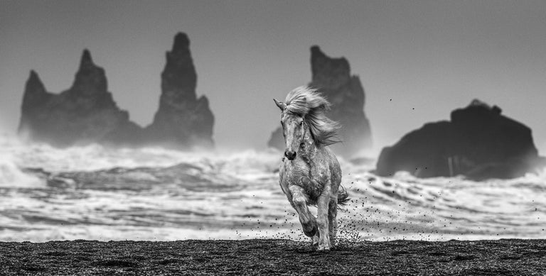 David Yarrow Black and White Photograph - White Horses