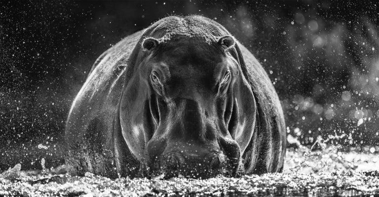 David Yarrow Black and White Photograph - Dexter