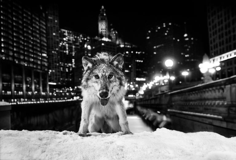 David Yarrow Black and White Photograph - Sweet Home Chicago: Homage to a Great City